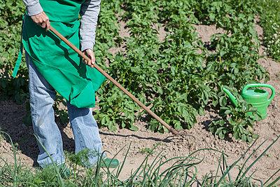 Low section of woman working in community garden - p301m961026f by Halfdark