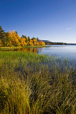 Reed in the water - p4263729f by Tuomas Marttila