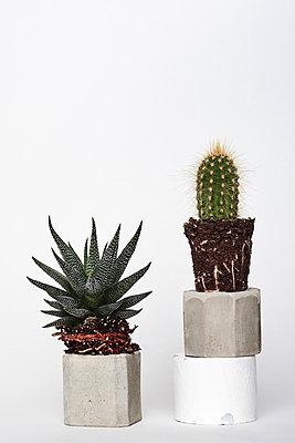 Cacti - p1323m1216772 by Sarah Toure