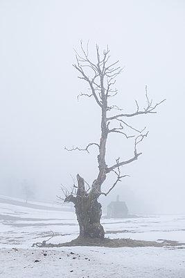Gnarled - p335m1123062 by Andreas Körner