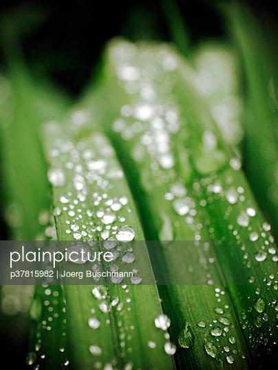Raindrops on green grass - p37815982 by Joerg Buschmann
