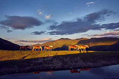 Pferde im Sonnenuntergang - p704m1492827 von Daniel Roos