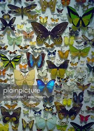 Schmetterlingssammlung - p757m1123887 von Mimi Forsyth