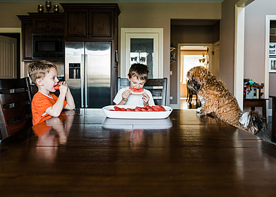 Brothers eating watermelon while sitting with dog at table - p1166m1489510 by Cavan Images