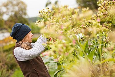 Austria, Schiltern, Alternative gardener at tobacco plant - p300m2213705 by Dieter Schewig