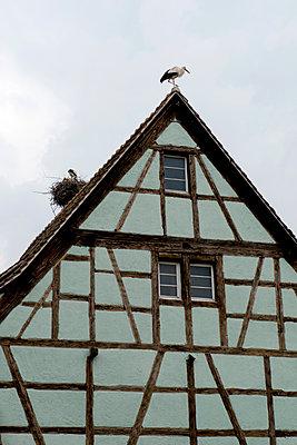 Fachwerkhaus mit Storchennest - p451m1149675 von Anja Weber-Decker