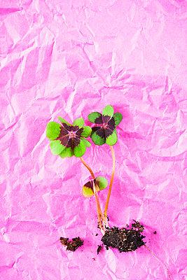Lucky clover - p1149m2116604 by Yvonne Röder