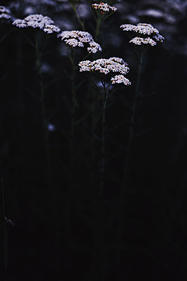 Macro shoot of white flora inside the forest - p1166m2088046 by Cavan Images