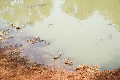 Crocodile in Djoudj Parc, Senegal - p1610m2181478 by myriam tirler
