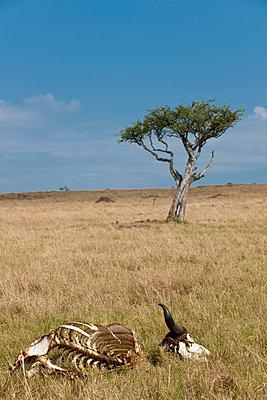 Masai Mara National Park - p5330339 by Böhm Monika