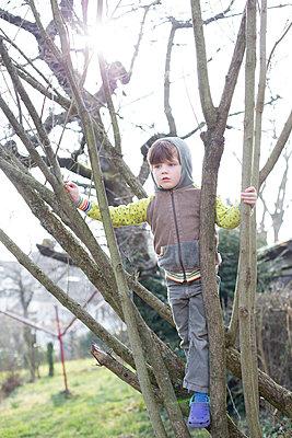 Kind klettert im Baum - p1308m1332369 von felice douglas