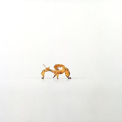 Gespenstschrecke - p6060162 von Iris Friedrich