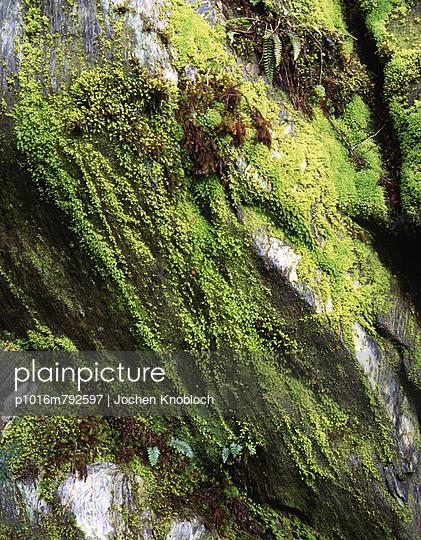 Bewachsene Felswand - p1016m792597 von Jochen Knobloch