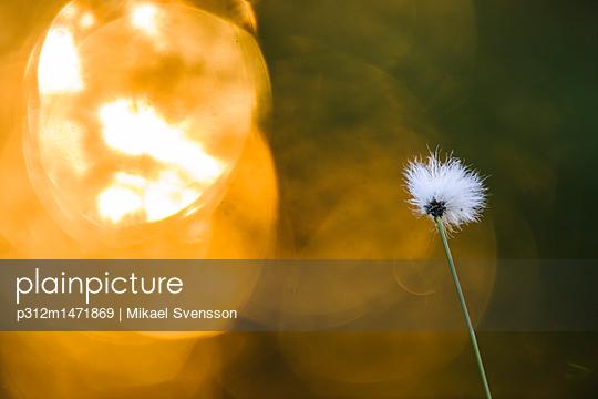 p312m1471869 von Mikael Svensson