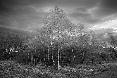 Landschaft in Russland - p1653m2232277 von Vladimir Proshin
