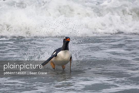 p884m1145331 von Sean Crane