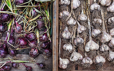 Garlic bulbs and red onions - p312m2140093 by Pernille Tofte
