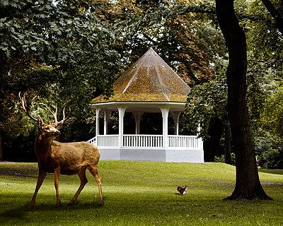 Park mit Pavillon und Hirsch - p415m808538 von Tanja Luther