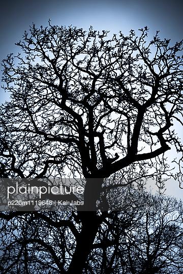 Baum im Winter - p220m1119648 von Kai Jabs