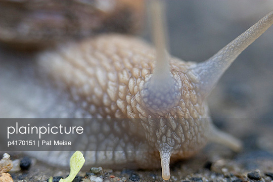 Snail shell - p4170151 by Pat Meise