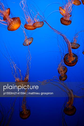 Medusen - p1553m2141594 von matthieu grospiron
