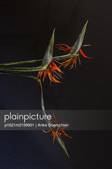 p1621m2199901 by Anke Doerschlen