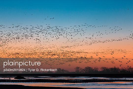 p343m2010824 von Tyler D. Rickenbach