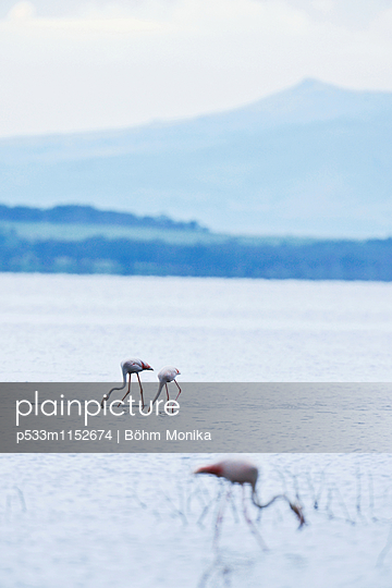 Flamingos im Nakurusee - p533m1152674 von Böhm Monika