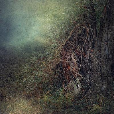 Season of the Witch - p1633m2208988 by Bernd Webler