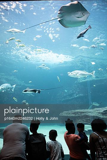 Two Oceans Aquarium, visitors marvel at sea animals - p1640m2246232 by Holly & John