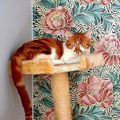 Cat resting - p1418m2272905 by Jan Håkan Dahlström