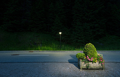 Box of flowers by roadside, Salzburg, Austria - p429m824488 by Mischa Keijser