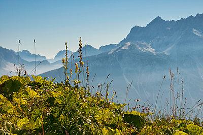Blumenwiese in den Dolomiten - p470m1190160 von Ingrid Michel