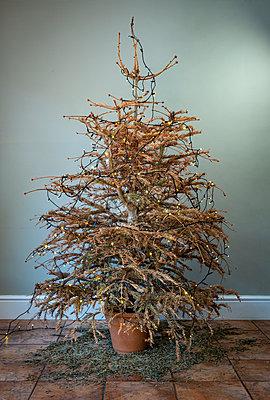 Trister Weihnachtsbaum - p1057m2185611 von Stephen Shepherd