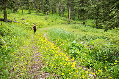 Rear view of female hiker with backpack walking on grassy field in forest - p1166m2067610 by Cavan Images