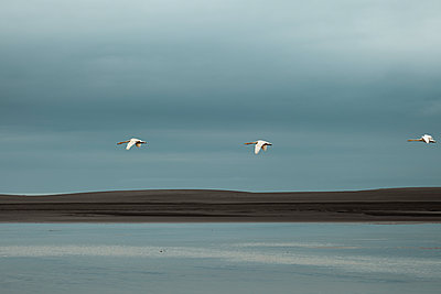Three swans - p1585m2285334 by Jan Erik Waider