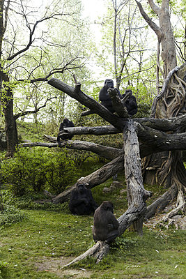 Affengehege im Zoo - p4150520 von Tanja Luther