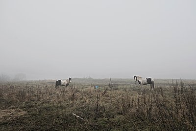 Horse in misty countryside landscape - p429m1118303 by Dan Prince