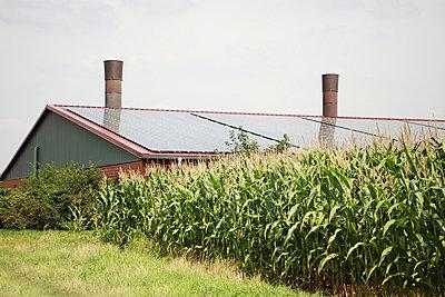 Maisfeld und Solarzellen - p902m831661 von Mölleken