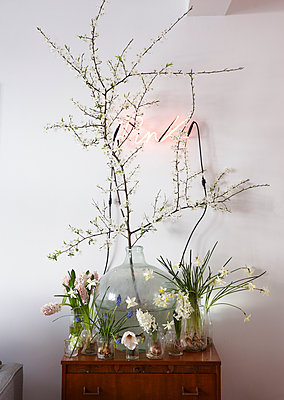 Easter and spring flowers in jars and vase and neon Pink sign on wall - p349m2167874 by Sussie Bell