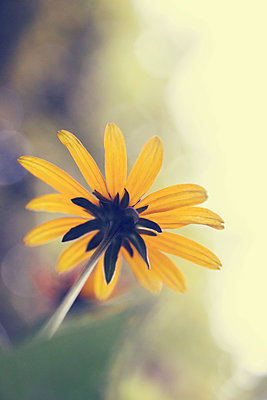 Yellow flower - p879m2133668 by nico