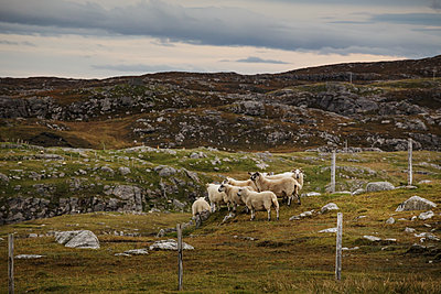 Highlands - p910m2008166 by Philippe Lesprit