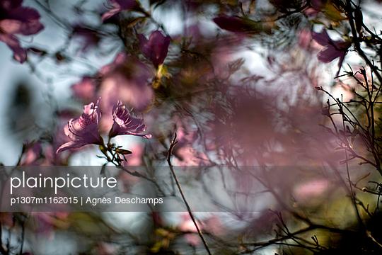 p1307m1162015 von Agnès Deschamps