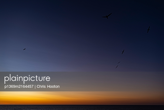 Silhouettes of birds flying at sunset - p1369m2164457 by Chris Hooton