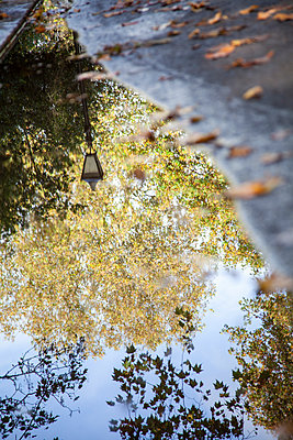 Trees and Lamppost Reflected in Puddle  - p1248m2223150 by miguel sobreira