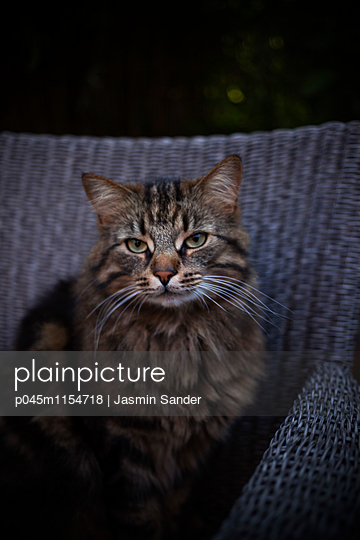 Kater-Portrait - p045m1154718 von Jasmin Sander