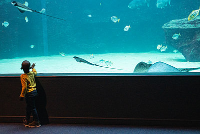Two Oceans Aquarium, toddler marvels at sea animals - p1640m2246226 by Holly & John