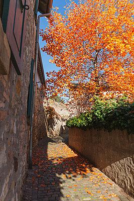 Germany, Rhineland-Palatinate, Freinsheim, city wall and empty way in autumn - p300m2042076 by Gaby Wojciech