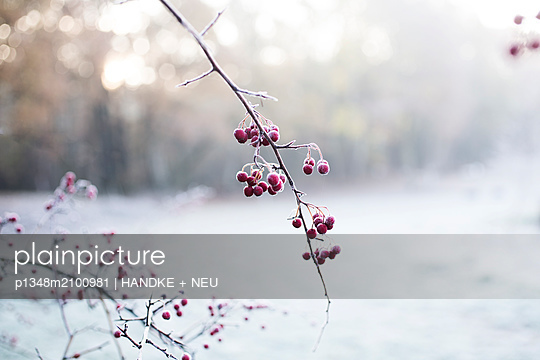 p1348m2100981 by HANDKE + NEU