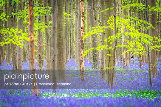 p1377m2049171 von Francesco Iacomino